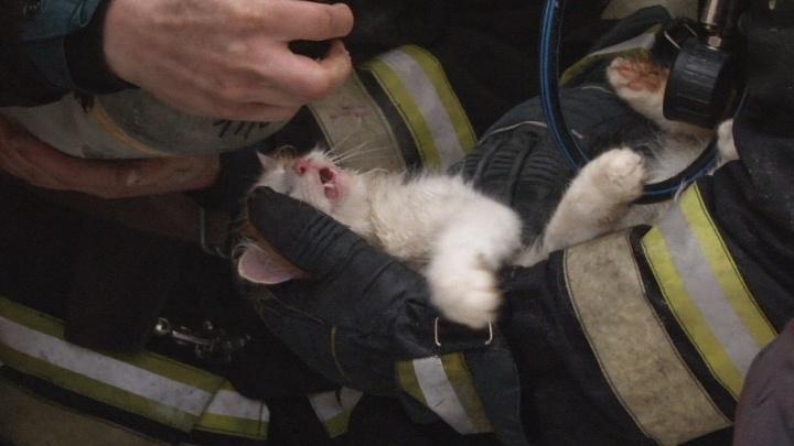 В Волгограде умерший при пожаре кот воскрес на руках у спасателя
