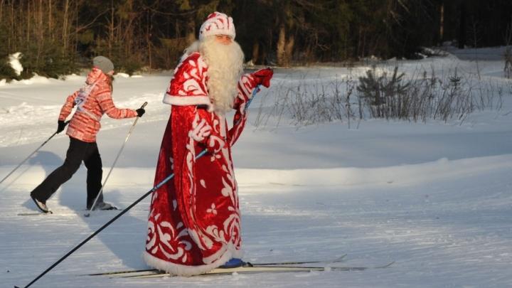 Собаки, Дед Мороз и малыши: в забеге «Лыжня России» приняли участие семь тысяч пермяков