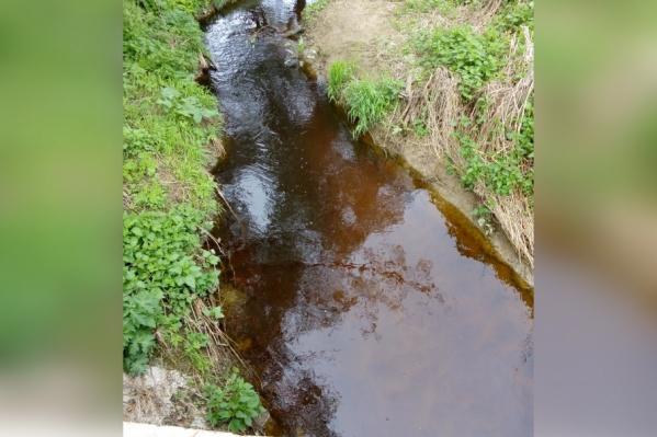 Фото реки Нора