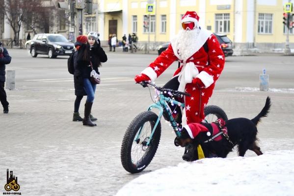 Четвероногий участник велопробега привычно бежал следом за велосипедом хозяина