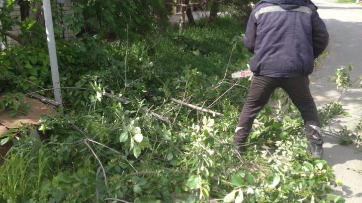 В Тюмени сильный ветер повредил стволы и оторвал ветви 280 деревьев