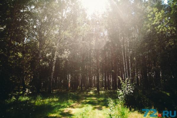 В этом сезоне в тюменских лесах потерялись четыре человека
