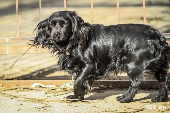 В Ростове живут около восьми тысяч бездомных животных