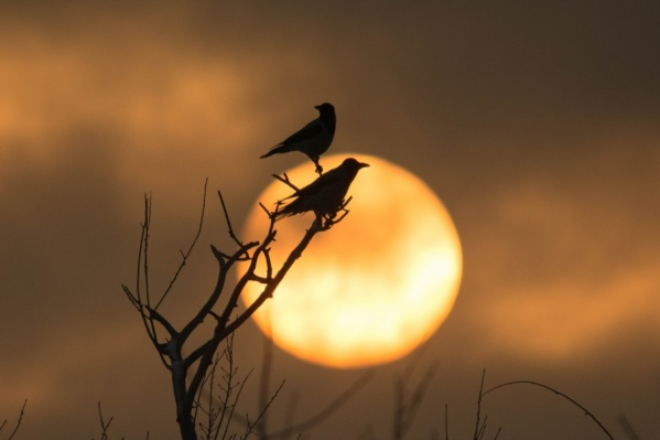 Волжский фотограф-натуралист показал загадочную птицу во всей ее красе