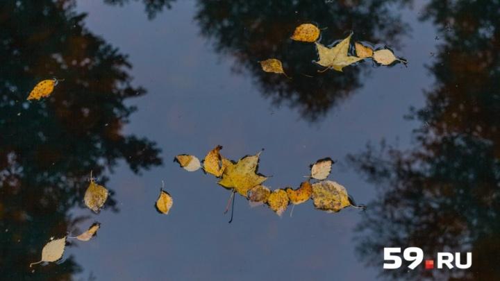 Тепло, но с дождями и мокрым снегом: рассказываем о погоде на ноябрь в Перми