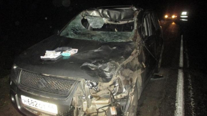 В Ярославской области на трассе лось сломал пассажиру нос