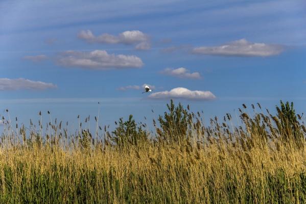 Донской край занял девятое место в экологическом рейтинге