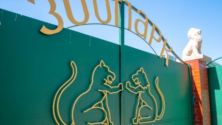 В Самарском зоопарке поселили лошадей Пржевальского