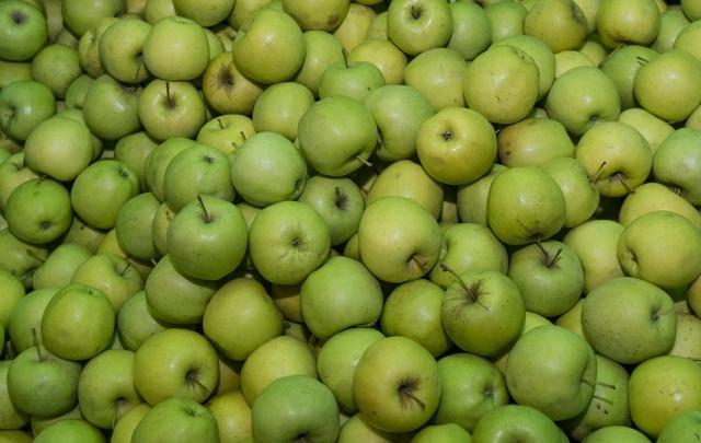 19,5 тонн яблок уничтожили в Ростове