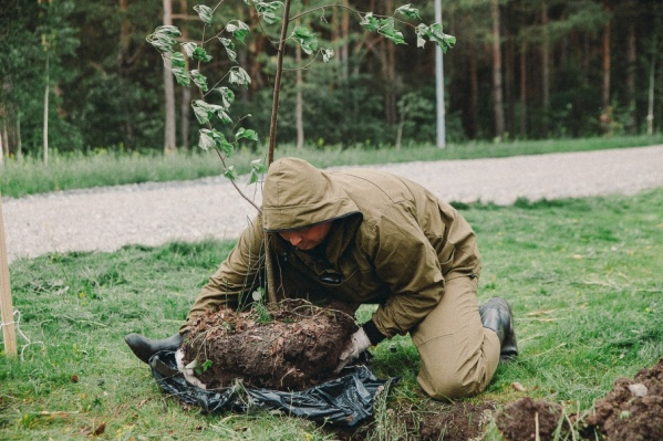В воскресенье, 8 октября, добровольцам предстоит посадить около 60 молодых деревьев
