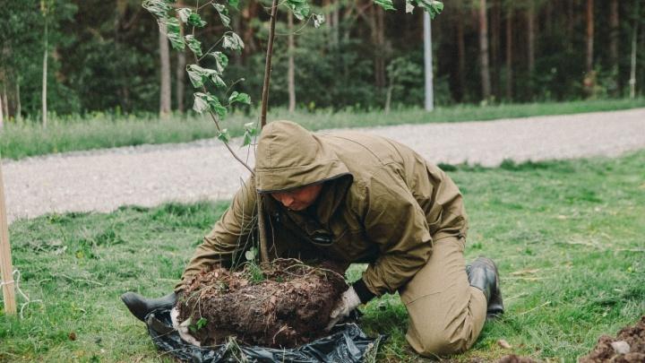 Тюменцы посадят на Московском тракте двухметровые яблони-дички