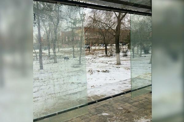 Дыра на месте антивандального стекла зияет уже полмесяца