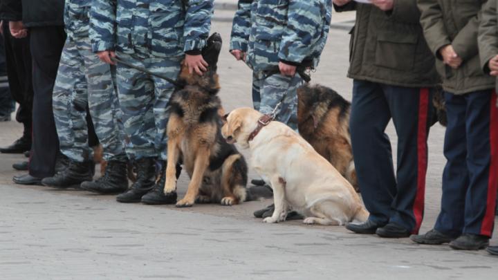 Граната, ружья и патроны: житель Зернограда попался на хранении оружия