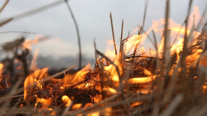 В Тюмени создают дополнительные мобильные группы для мониторинга пожаров