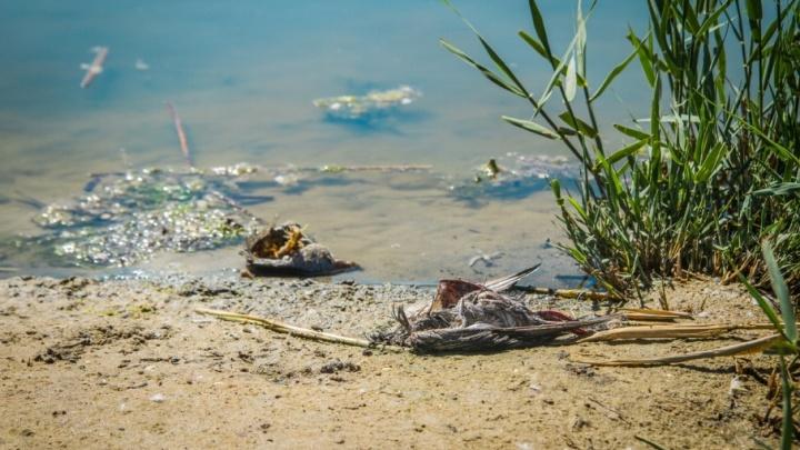 Едва не утонули: в Ростовской области спасли двух любителей речных прогулок
