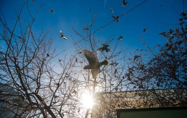 Тюменцев приглашают отметить Международный день птиц