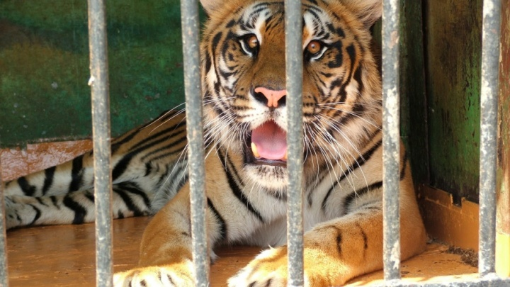 Волгоградец попросил зоопарк у Владимира Путина