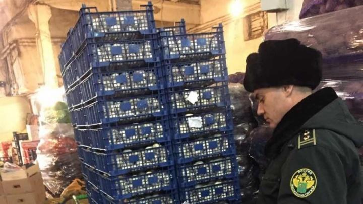 В Самаре уничтожили 83 ящика польских шампиньонов