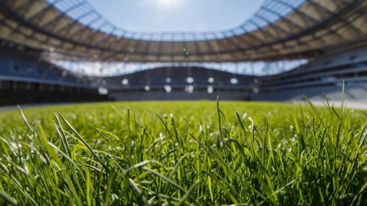 На стадионе «Волгоград Арена» канадскую траву связали крепкой нитью