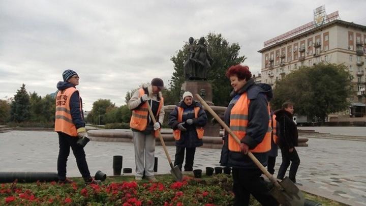 Более тысячи кустов роз высадят в Краснооктябрьском районе Волгограда