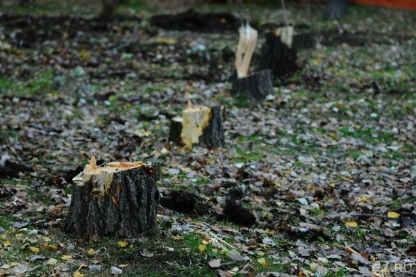 Только в Октябрьском районе вырубят больше сотни деревьев.