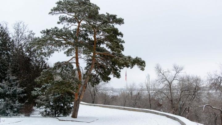 Волгоградскую область к концу недели снова скуют морозы