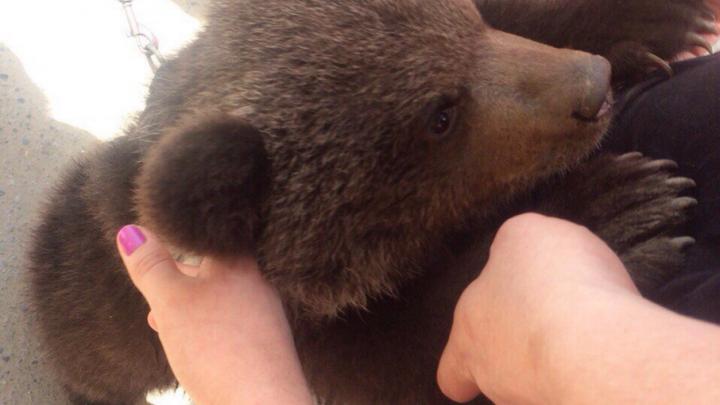 На оживленных улицах города в Ростовской области выгуливали медведя