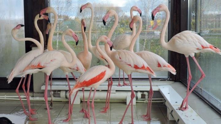 Жители ярославского зоопарка переехали в зимние вольеры
