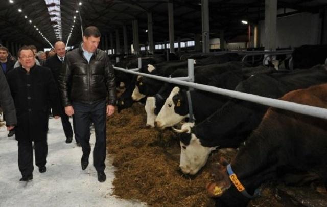 В Ярославской области открыли большую молочную ферму