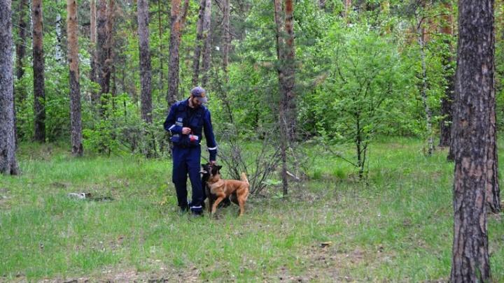 Четырёхлетняя девочка потерялась в Шершнёвском бору