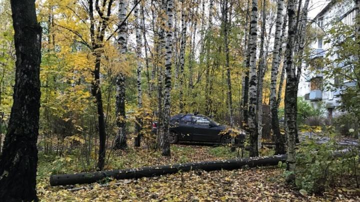 В Ярославле коммунальщики бросили упавший фонарный столб, и он покрылся мхом
