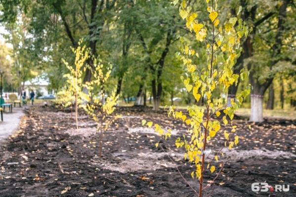 Каждый год аллею будет пополнять одно дерево