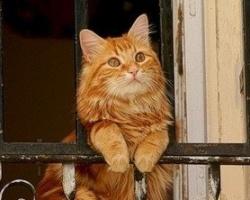«Армада»: ставим балконы что надо!