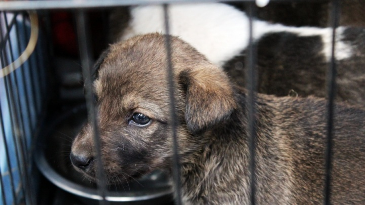 Волгоградцы ищут «заказчиков» безжалостной травли собак