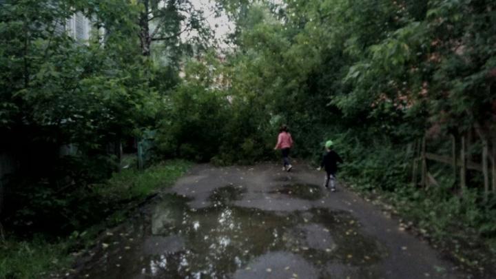 В Брагино упавшее дерево перекрыло дорогу