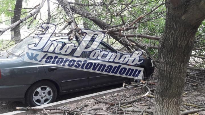 Недоброе утро: в Ростове дерево рухнуло на припаркованный автомобиль