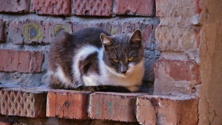 В Зубчаниновке ввели карантин из-за зараженного бешенством котенка