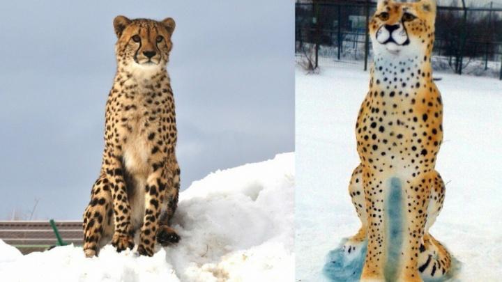 В ярославском зоопарке у гепарда появился снежный двойник