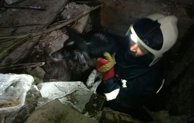 В Кунгуре собаку спасли из погреба заброшенного гаража