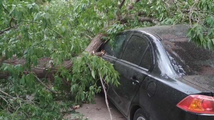 Упавшее дерево в Волгограде помяло MitsubishiLancer
