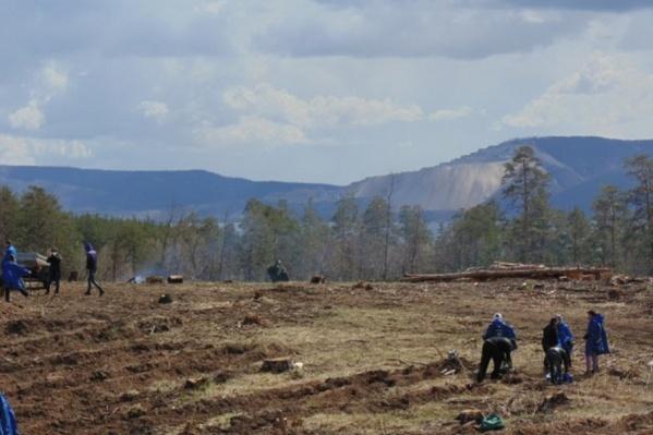 На восстановление лесов потребуется много лет