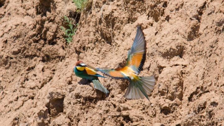 Волжанин запечатлел птиц с перьями всех цветов радуги