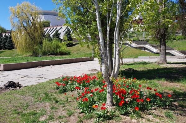 По словам мэрии, сейчас в городе цветет 30 тысяч цветов