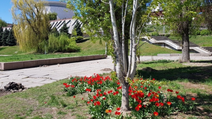 В Волгограде пообещали высадить 100 тысяч тюльпанов, роз и бархатцев