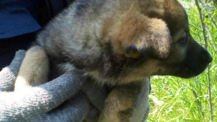 В Тольятти спасатели вызволили из железобетонного плена щенка: малыша услышали прохожие