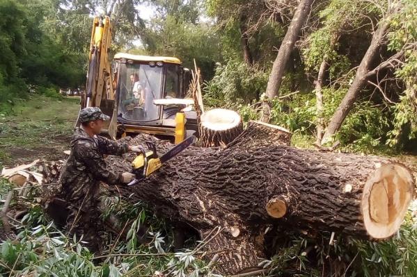 За лето в Челябинске вырубили деревьев на 10 миллионов рублей