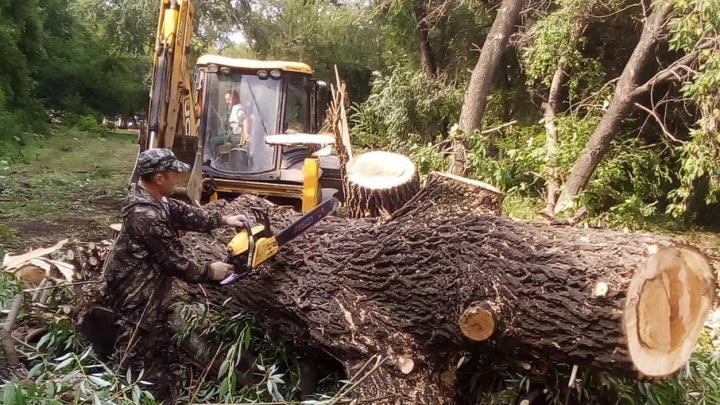 «Последний раз полюбовалась на ивы»: в челябинском дворе вырубили деревья под строительство здания