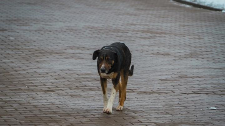 В Ростове построят новый приют для бродячих животных