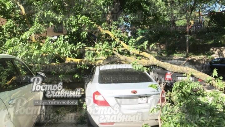 Разбиты две машины: в Ростове на парковку упала ветка старого дерева
