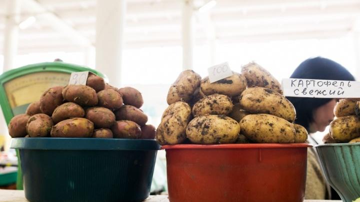 В Крыму будут выращивать картошку для Ярославской области